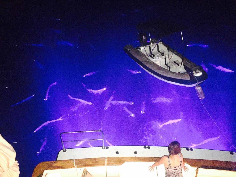 2004 Queenship 76' Barretta 76 SEA MYSTIC | Picture 1 of 86